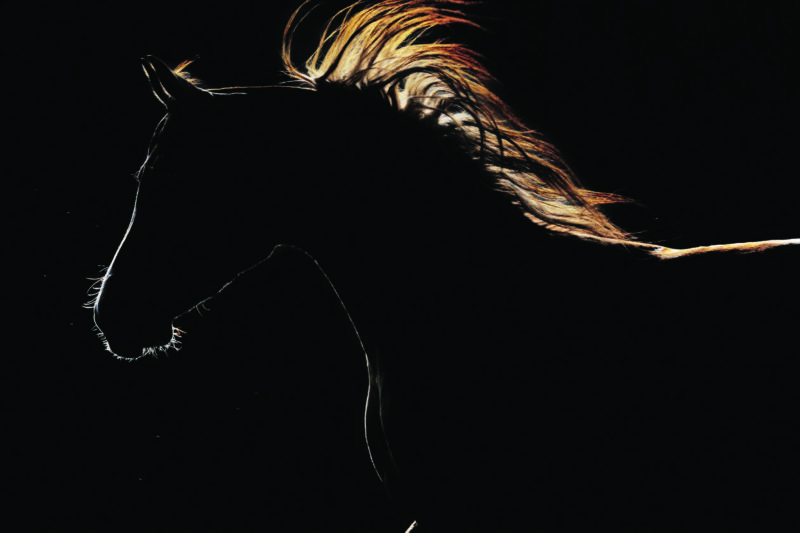 Horse Light Therapy